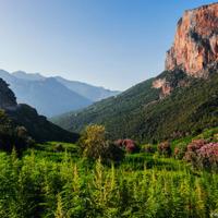 Champs irrigués de cannabis près d'Akchour, Maroc 1/2