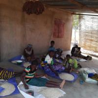Tri des semences de niébé (Burkina Faso)