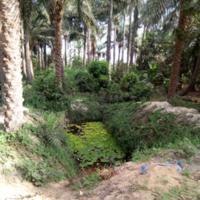 « Céane » ou puits traditionnel à Mboro-Total dans la commune de Daroukhoudoss (Sénégal)