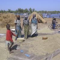 Battage de céréales au port de Baga Kawa